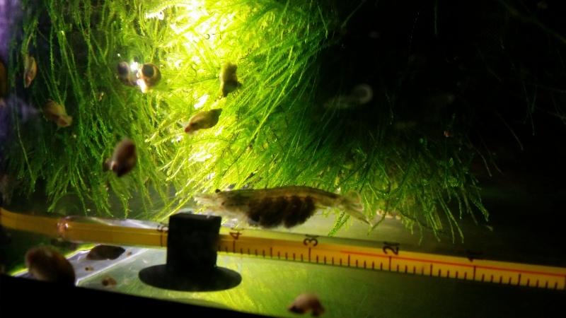 2 aquariums 240L : Spécifique Cacatuoides et Communautaire 20150136