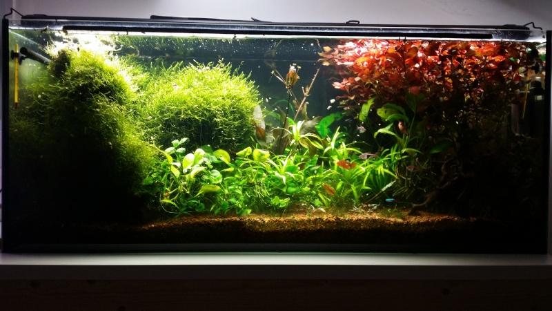 2 aquariums 240L : Spécifique Cacatuoides et Communautaire 20150186