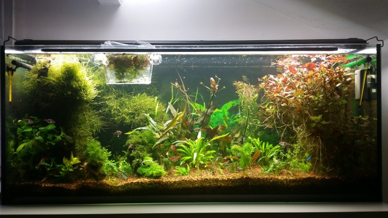 2 aquariums 240L : Spécifique Cacatuoides et Communautaire 20150187