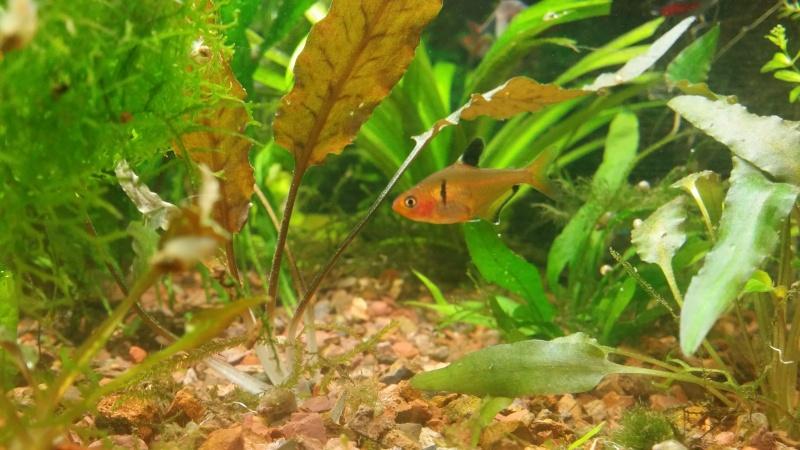 2 aquariums 240L : Spécifique Cacatuoides et Communautaire 20150189