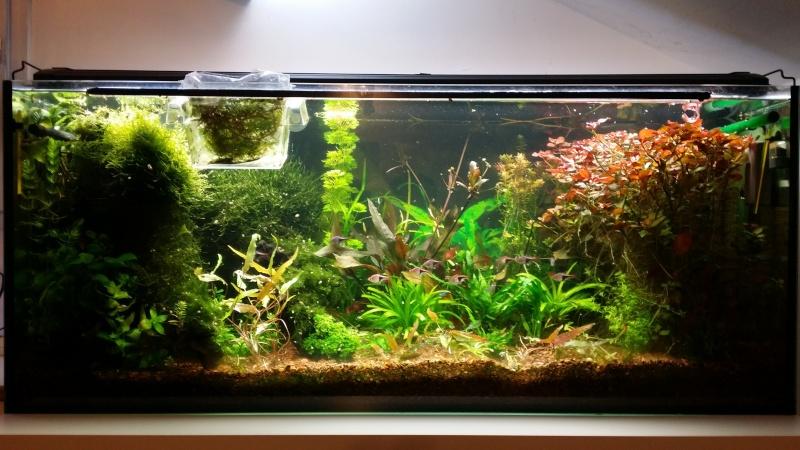 2 aquariums 240L : Spécifique Cacatuoides et Communautaire 20150216