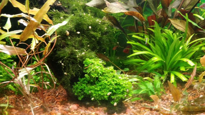 2 aquariums 240L : Spécifique Cacatuoides et Communautaire 20150218