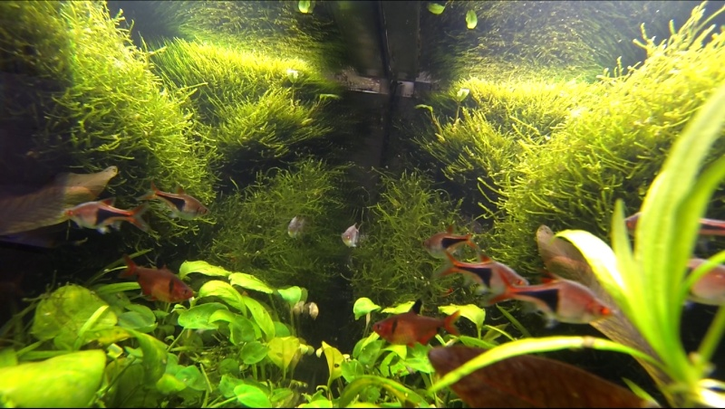 2 aquariums 240L : Spécifique Cacatuoides et Communautaire Site_m34