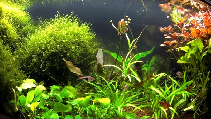 2 aquariums 240L : Spécifique Cacatuoides et Communautaire Site_m35