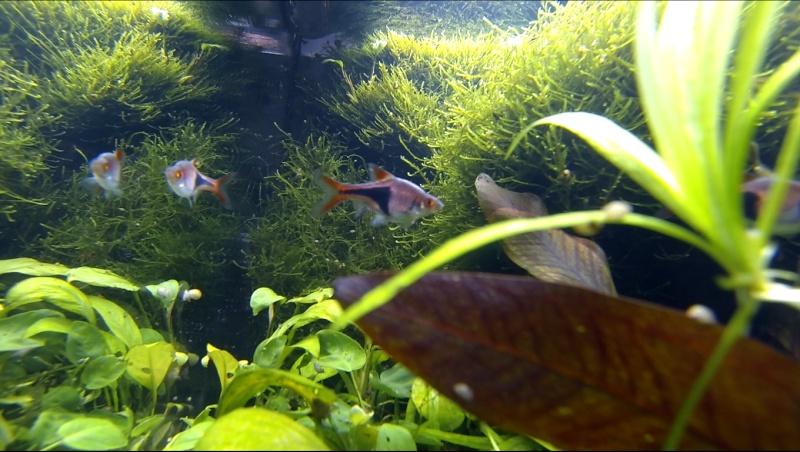 2 aquariums 240L : Spécifique Cacatuoides et Communautaire Site_m37