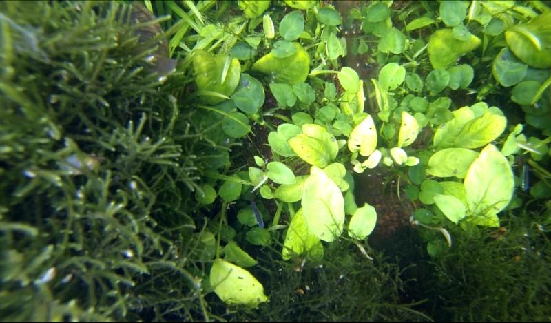 2 aquariums 240L : Spécifique Cacatuoides et Communautaire Site_m39