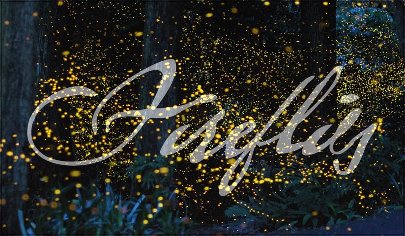 ❥ Fireflies