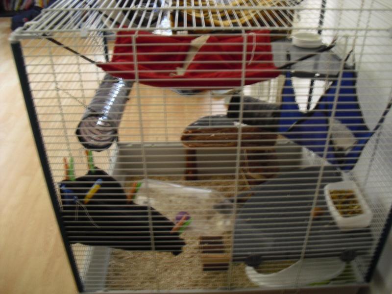 Photos de vos cages - Page 3 Cimg1615