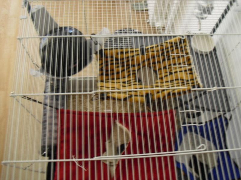 Photos de vos cages - Page 3 Cimg1616