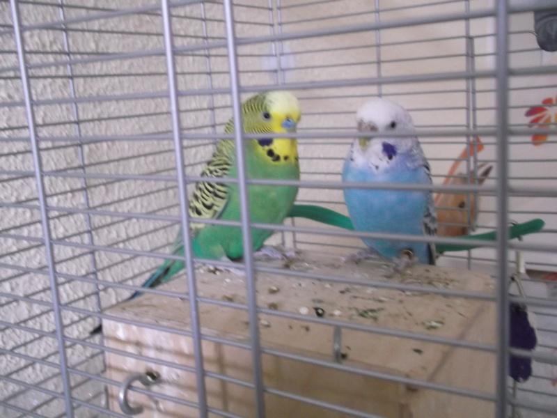album photo de mes oiseaux  Dscf2519