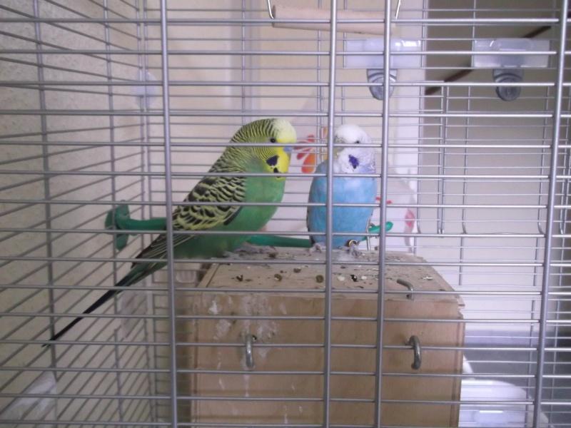 album photo de mes oiseaux  Dscf2520