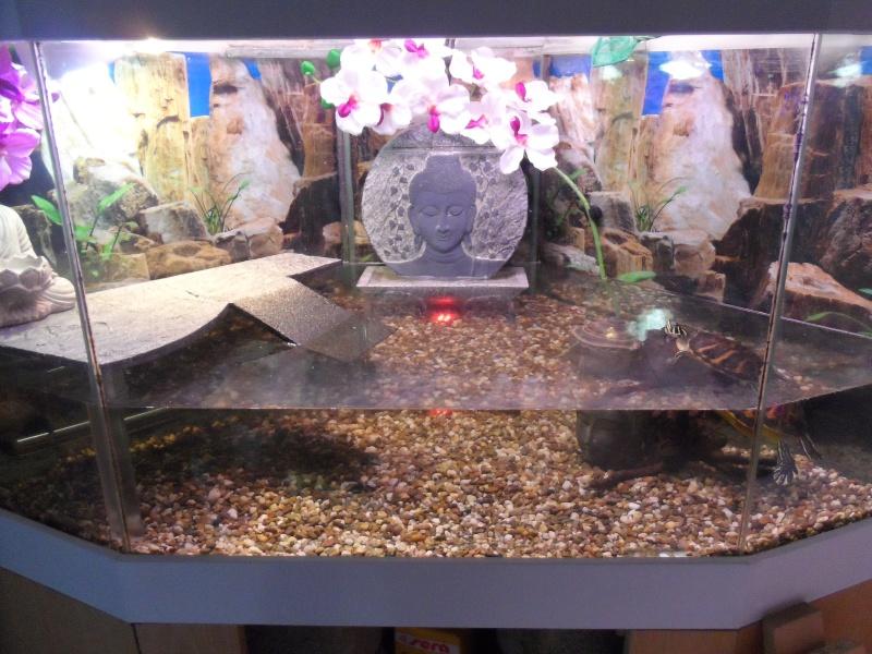 Postez une photo de votre aquarium ... ici Sam_1016