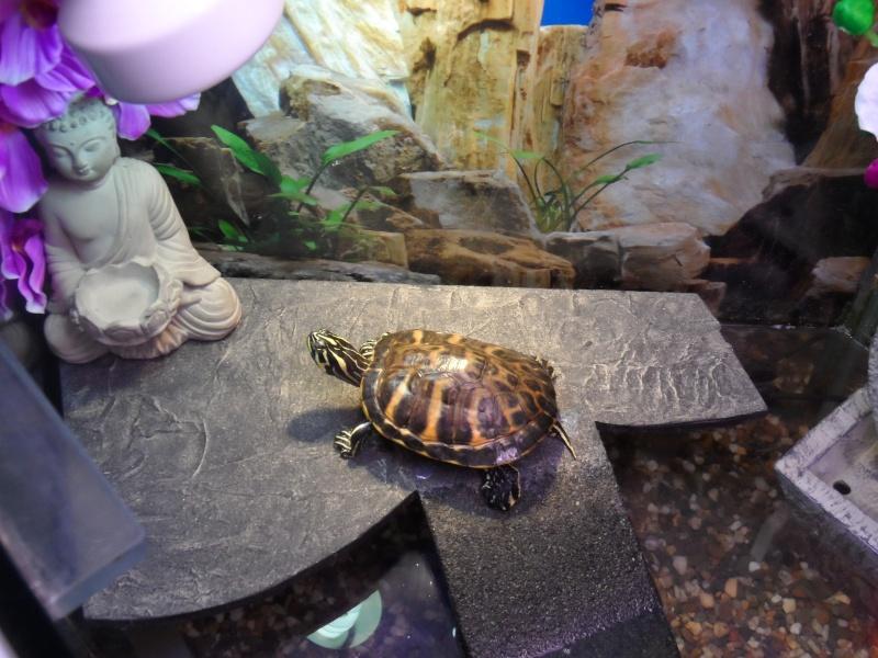 Postez une photo de votre aquarium ... ici Sam_1017