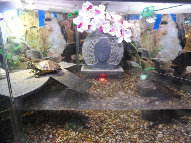 Postez une photo de votre aquarium ... ici Sam_1018
