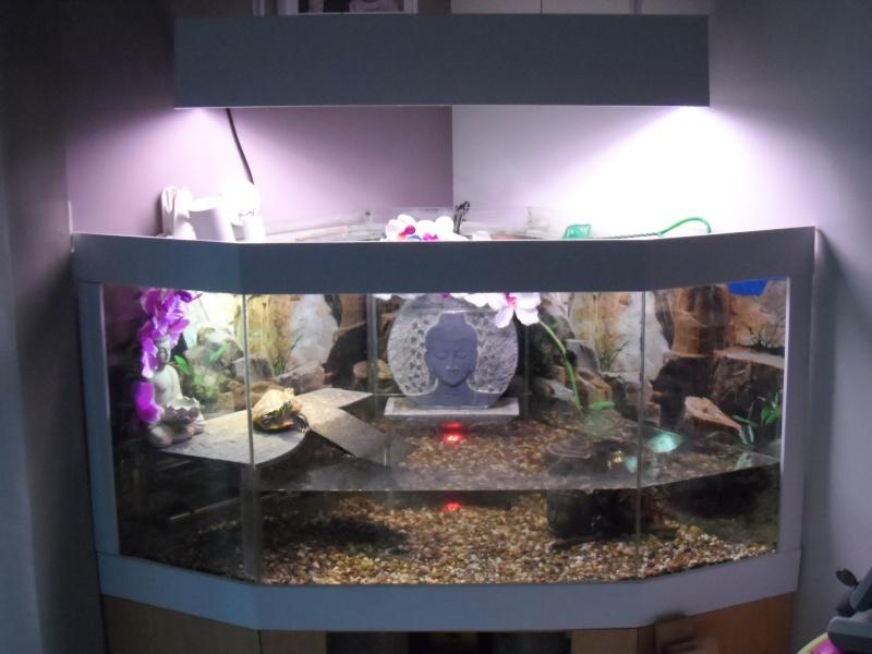 Postez une photo de votre aquarium ... ici Sam_1019