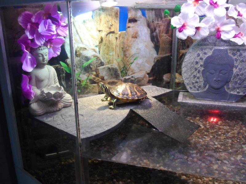 Postez une photo de votre aquarium ... ici Sam_1020