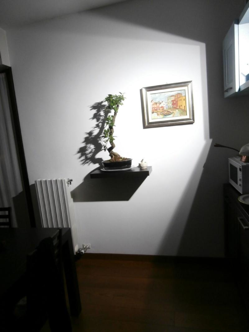 """Ficus Retusa """"Perronius"""" Effett10"""
