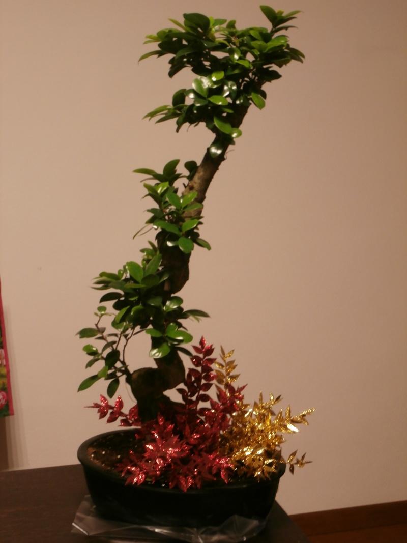 """Ficus Retusa """"Perronius"""" - Pagina 5 Perron10"""