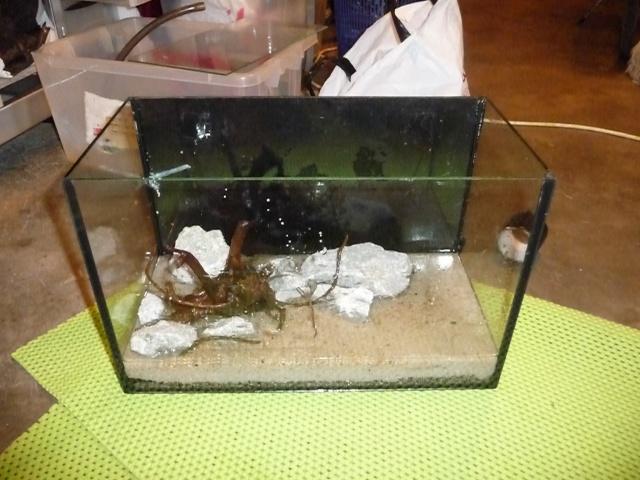 Mini fishroom - en cours P1340016