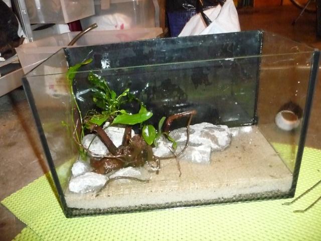Mini fishroom - en cours P1340017
