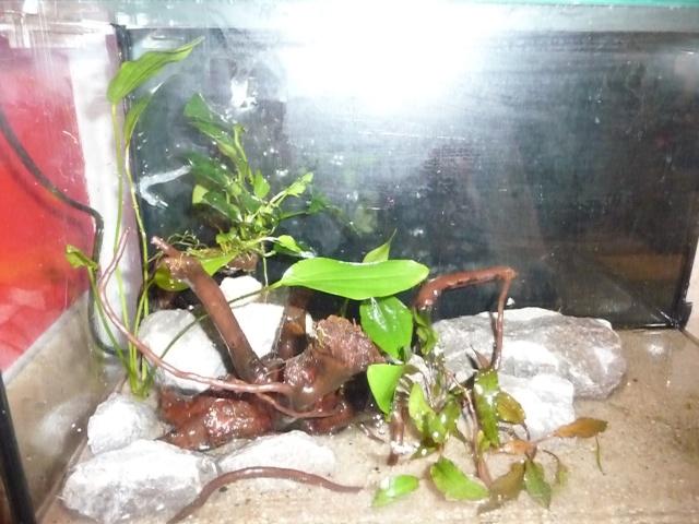 Mini fishroom - en cours P1340018