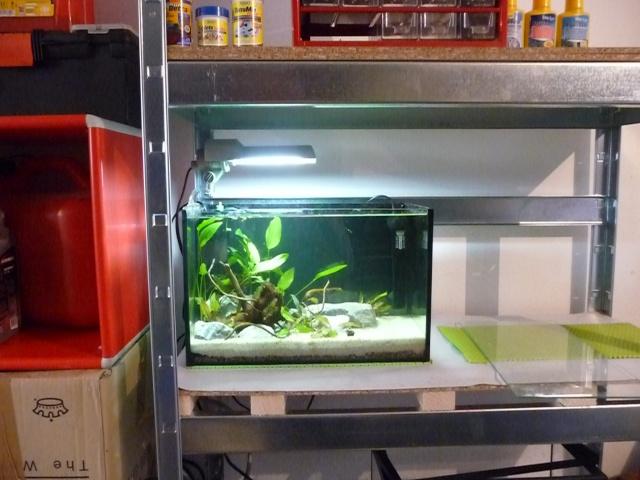 Mini fishroom - en cours P1340019