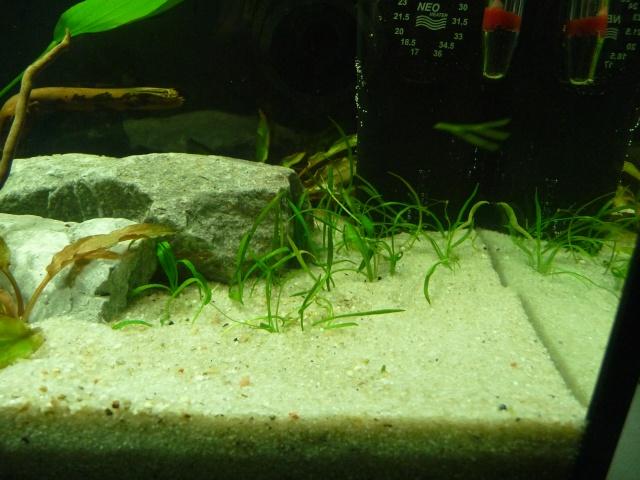 Mini fishroom - en cours - Page 2 P1340020