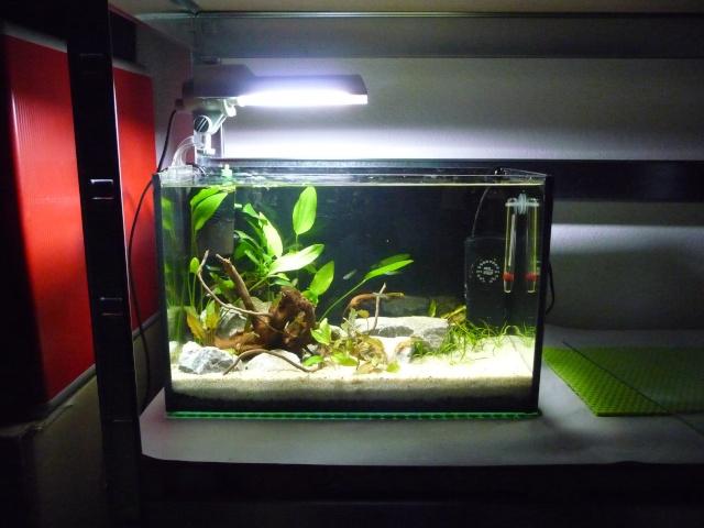Mini fishroom - en cours - Page 2 P1340021