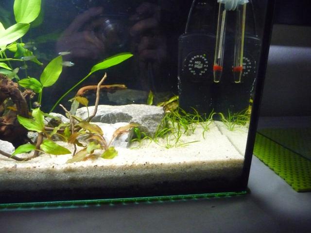 Mini fishroom - en cours - Page 2 P1340022
