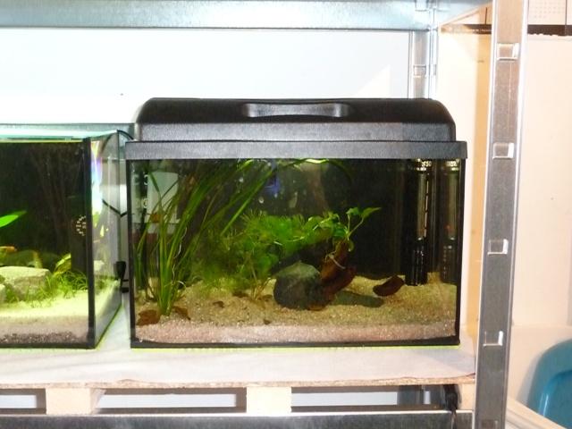 Mini fishroom - en cours - Page 2 P1340029