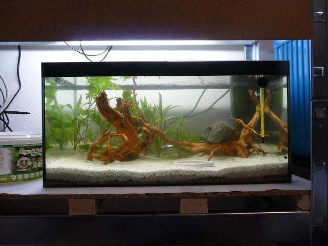 Mini fishroom - en cours - Page 3 P1350010