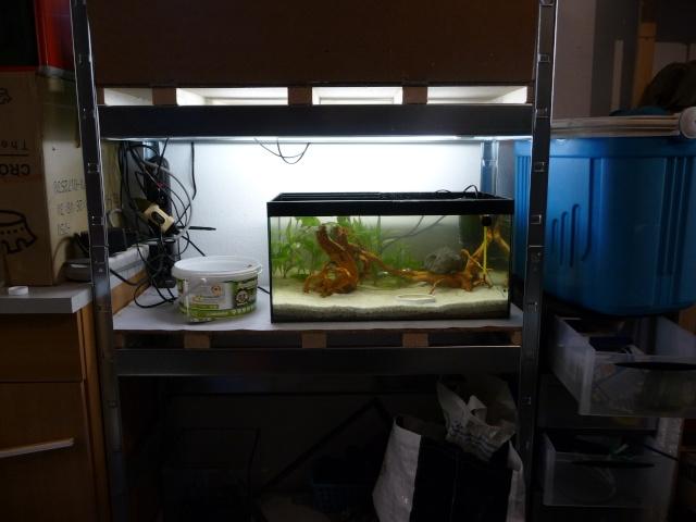 Mini fishroom - en cours - Page 3 P1350013