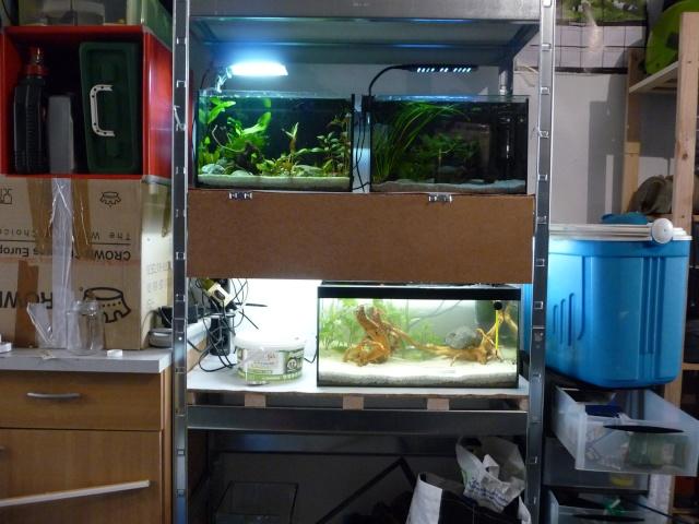 Mini fishroom - en cours - Page 3 P1350014