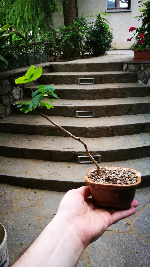 Divertirsi con poco... Mahonia aquifolium Img_2053