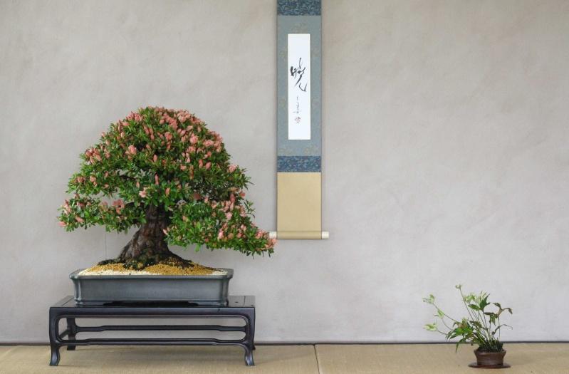 Insieme al maestro sulle strade del bonsai - Gemellaggio tra i club bonsai del veronese Azalea10