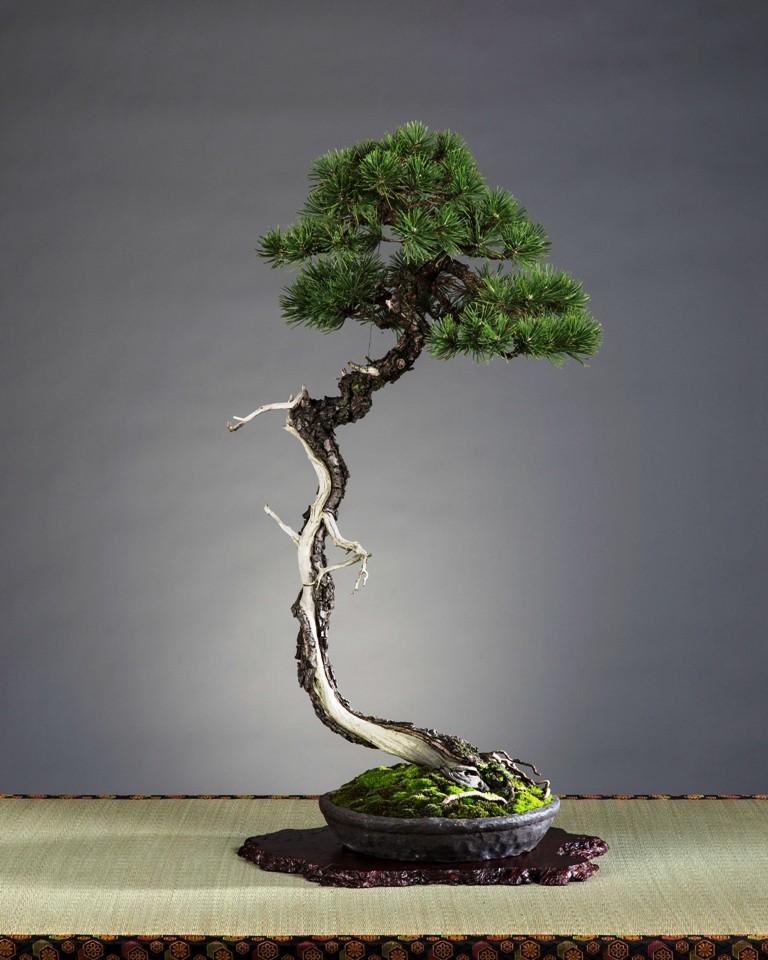 Insieme al maestro sulle strade del bonsai - Gemellaggio tra i club bonsai del veronese Bunjin10