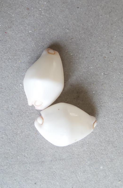 Calpurnus verrucosus - (Linnaeus, 1758) 2015-033