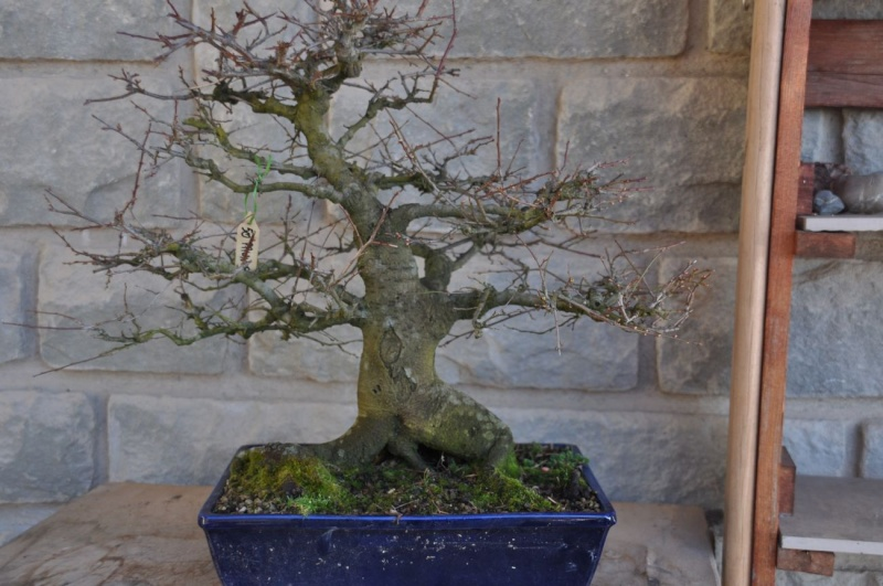 Tumori radicali Prunus10