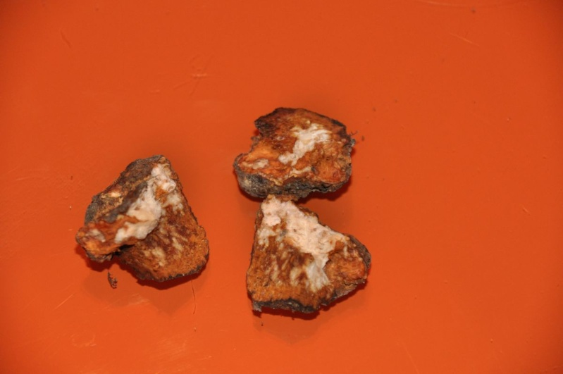 Tumori radicali Prunus21