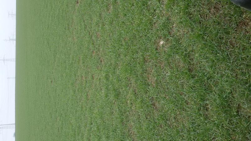tour de plaine en pays de caux Bergam10