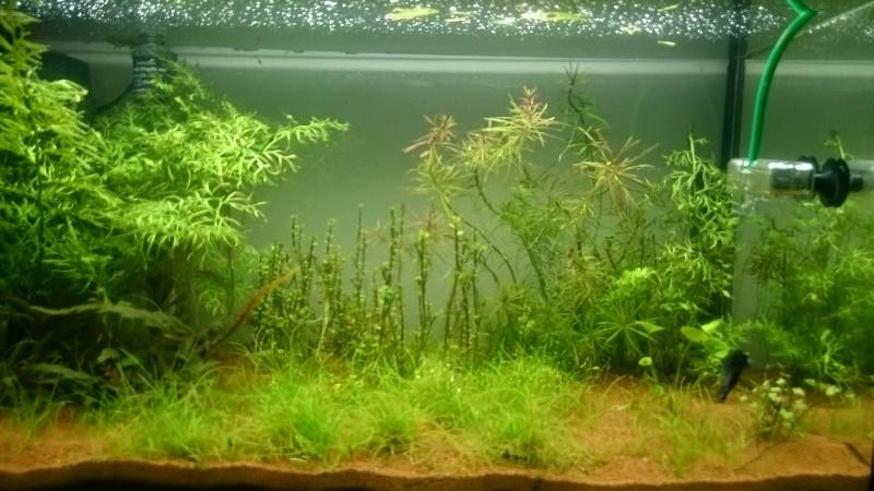 plante nenuphar pas de croissance  Ar_fun11