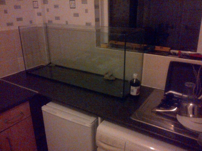 Deans Angels Fishroom Img-2014