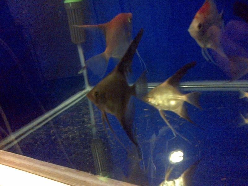 Deans Angels Fishroom Img-2024