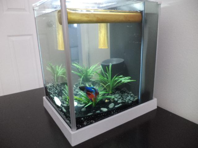 la surprise tropical  Aqua210