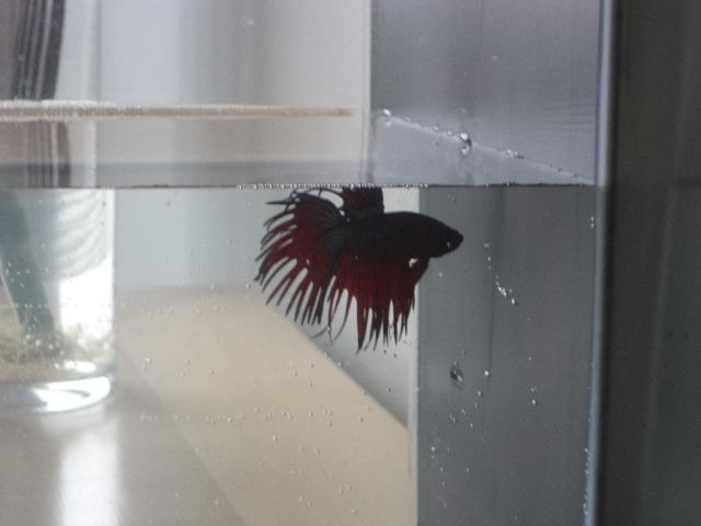 Voici mon nouvel ami et son nouvel appartement! Mignon11