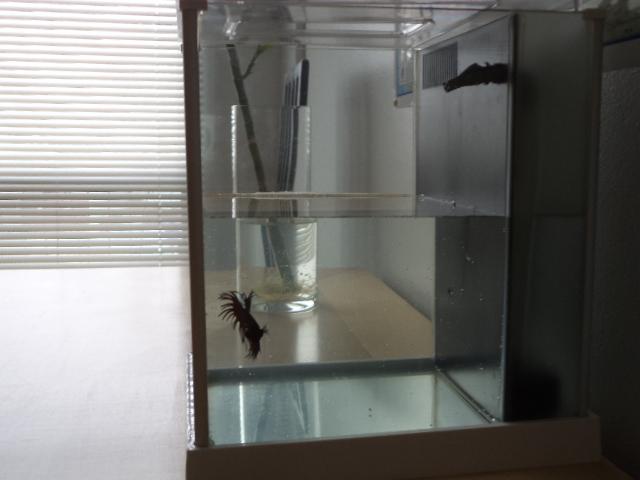 Voici mon nouvel ami et son nouvel appartement! P210