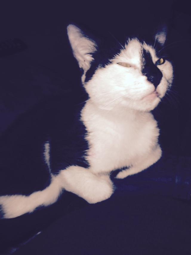 Joël, mâle, 09.2014, noir et blanc, poil mi-long Img_6513