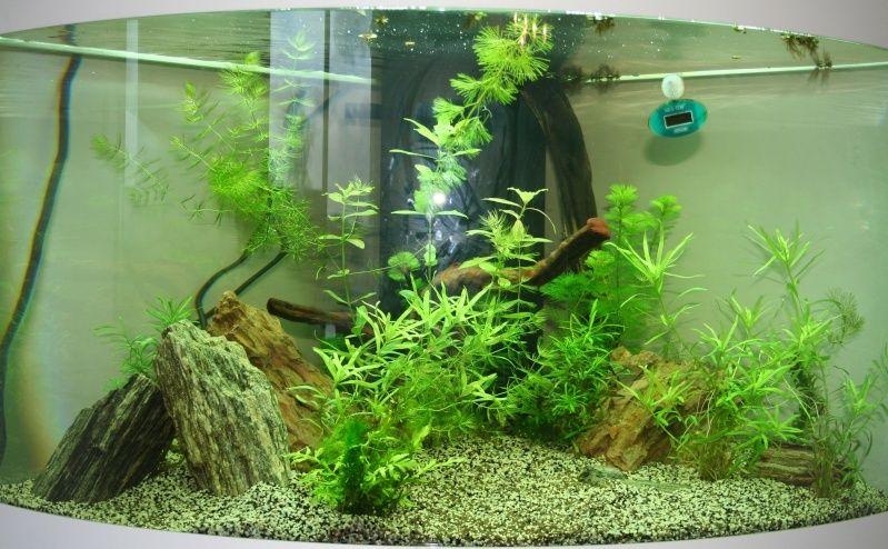 SeeNHiA - Aquarium d'angle 190L - Page 2 T190_j12