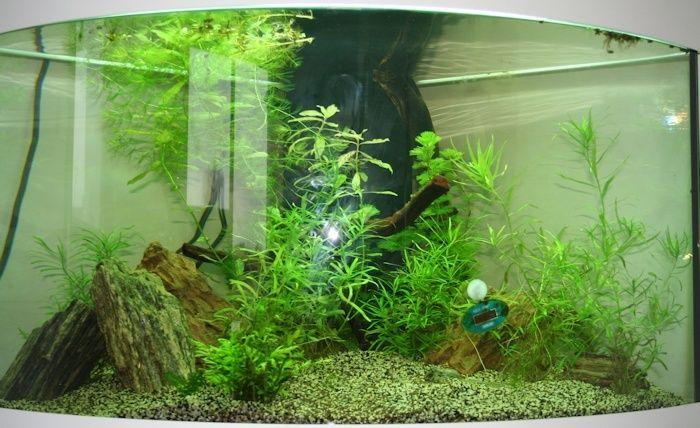 SeeNHiA - Aquarium d'angle 190L - Page 2 T190_j13