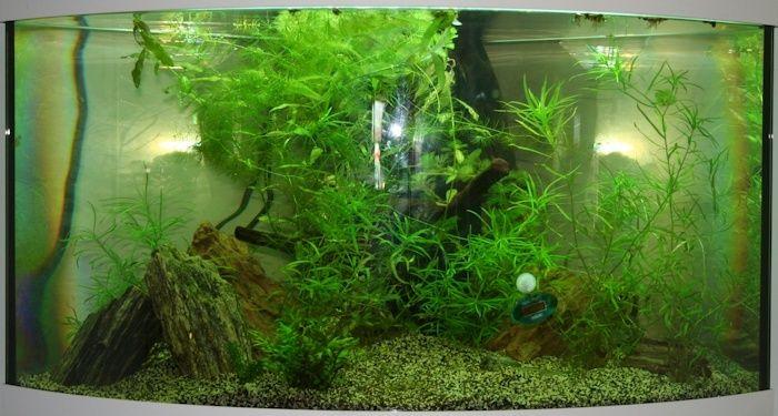 SeeNHiA - Aquarium d'angle 190L - Page 2 T190_j14